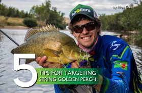 tips-golden-perch-spring-fishing