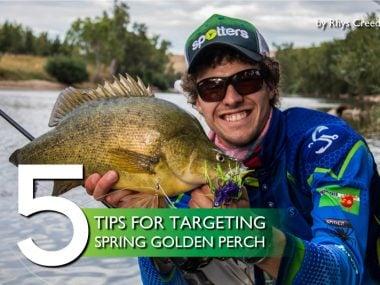 tips-golden-perch-spring-fishing