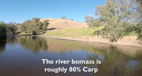 carp-issue