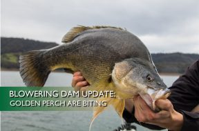 Blowering-Dam-Update