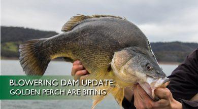 Blowering-Dam-Update