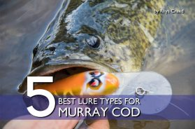 best-lure-types-murray-cod