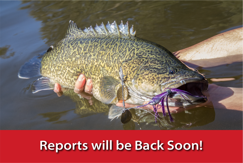 Reports will be Back Soon!