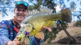 Golden Perch on the Murrumbidgee River