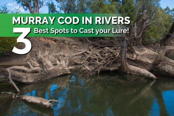 casting-murray-cod-in-rivers-structure