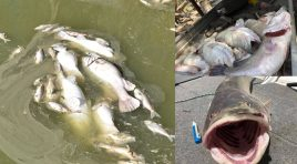 Darling River Fish Kill 2019 – What has happened?