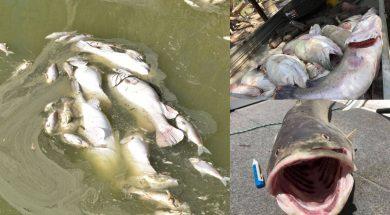 darling-river-2019-fish-kill