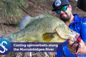 casting-spinnerbaits