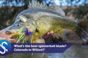 spinnerbait-blades-colorado-willow