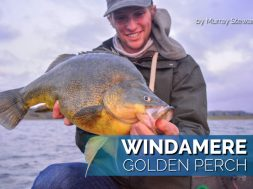 windamere-golden-perch-fishing