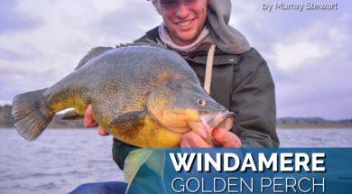 windamere-golden-perch-fishing