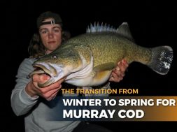 transition-winter-to-spring-murray-cod