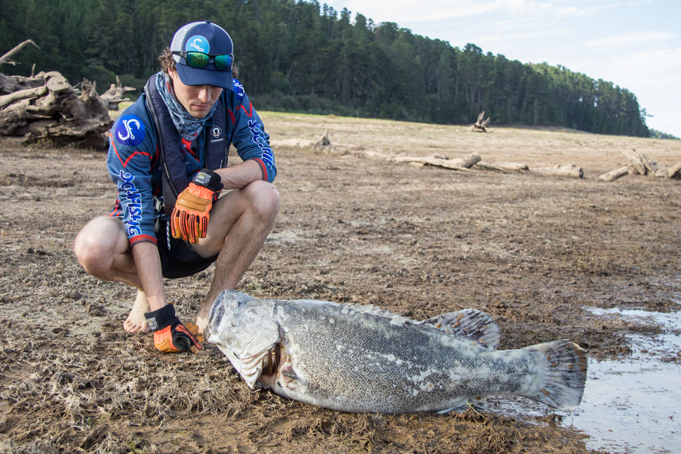 Massive Murray Cod Deaths in Blowering Dam 2019 – What has happened?