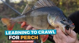 Learning to Crawl for Perch