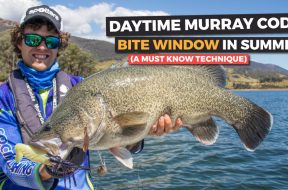 summer-murray-cod-fishing