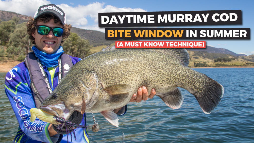 Daytime Murray Cod 'Bite Window' in Summer (A Must Know Technique)